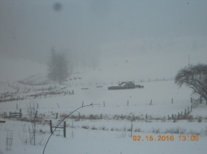 Feeding calves during snowstorm 02152016 (2)