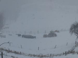 Feeding calves during snowstorm 02152016 (3)