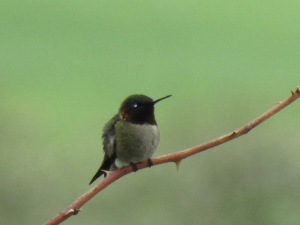 This is a 2015 hummingbird but looks much like the one that arrived yesterday.