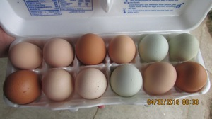 Fresh free-range chicken eggs for $2.00 a dozen