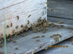 And of course, where would we be without our wonderful honeybees pollinating everything.