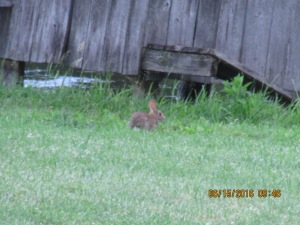 We have wild rabbits everywhere and sure hope they don't get in the garden.