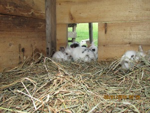 They really seem to like their new nest and have been playing and running all afternoon.