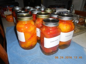 We canned 14 quarts of whole tomatoes yesterday.