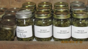 Pickles, pickles and more pickles!  I canned 36 pints of pickle relish.