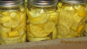 Canned fresh squash