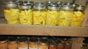 21 quarts of squash to use in casseroles and soup