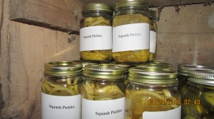 18 pints of pickled squash