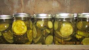 28 pints of sweet pickles