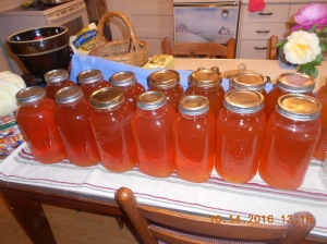 Twenty half-gallons of fresh apple juice canned and sealed.
