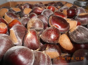 The chestnuts were few this year but the ones we picked up were huge and so sweet.
