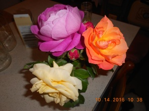 my-last-roses-for-2016-1
