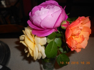 my-last-roses-for-2016-3
