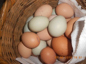 You just can't beat fresh farm eggs that come from free range chickens!