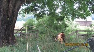 wind-damage-at-mansion-072016-11