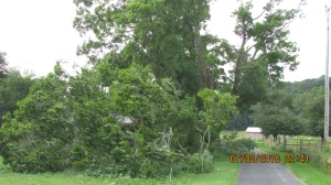 wind-damage-at-mansion-072016-18